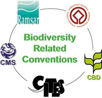 Joint websites of the biodiversity-related conventions