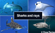 Sharks and Manta rays